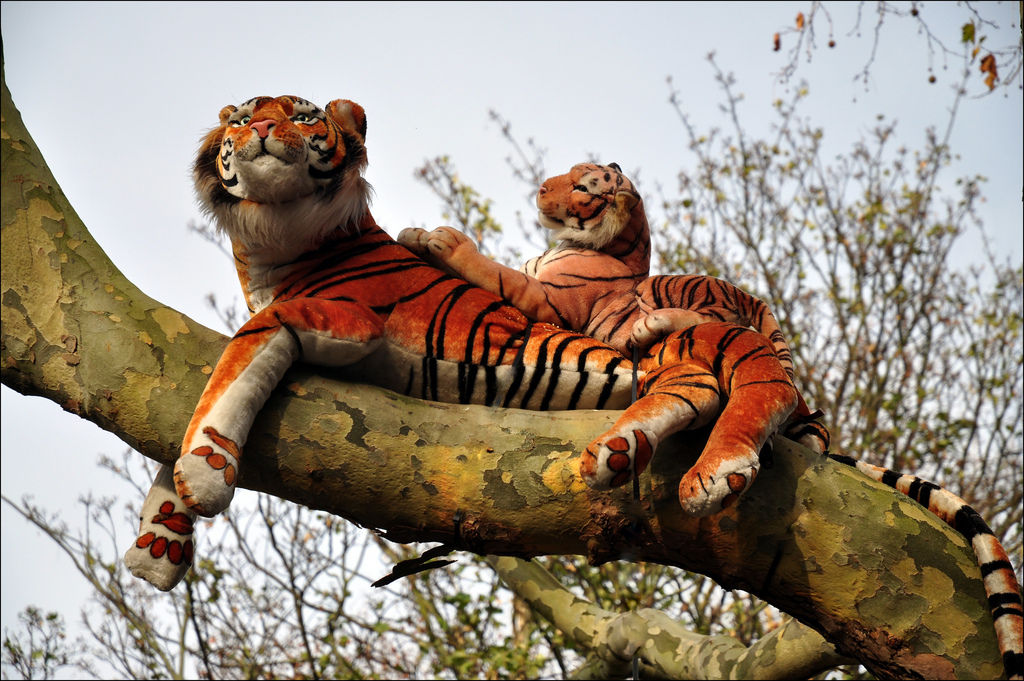 A realistic like tiger was found in a Scottish farmers barn.