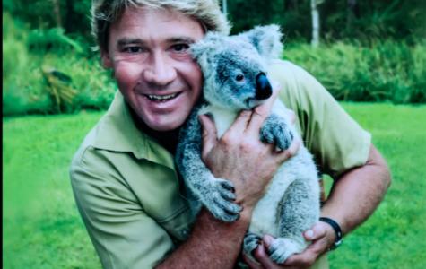 Remembering the Crocodile Hunter